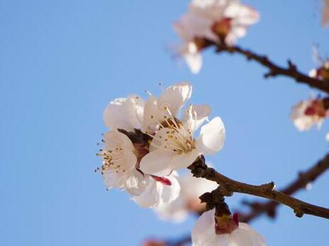 清明节是每年的几月几日 介绍一下清明节的习俗