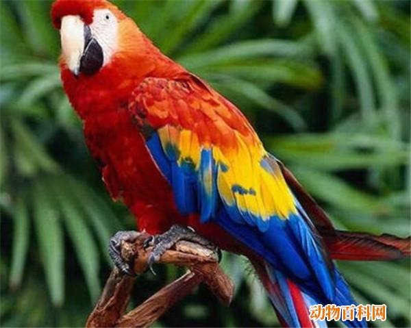 世界上最丑鹦鹉是什么品种,什么动物又胖又丑