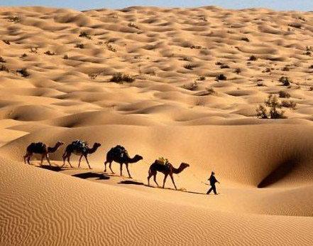 自然志:非洲一年四季都热得要命吗