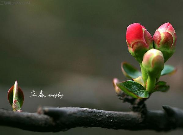 立春_二十四节气之立春,立春节气,二十四节气|24节气