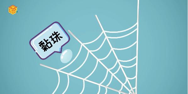 为什么蜘蛛不会被自己的网黏住