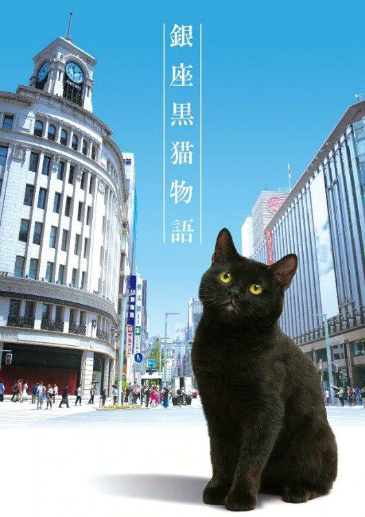 银座黑猫物语电视剧海报