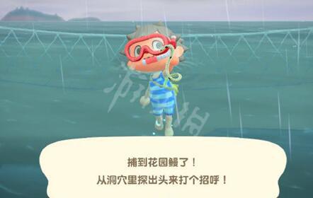 动物森友会潜水抓鱼攻略 动森潜水抓鱼技巧